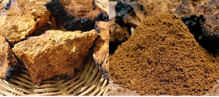 Bảo quản nấm chaga bằng cách xay thành bột