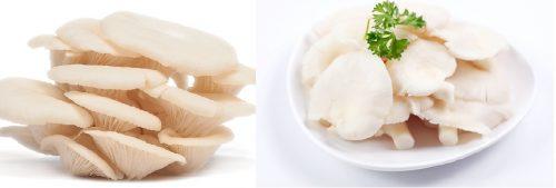 Nấm bào ngư chứa nhiều chất dinh dưỡng tốt cho cơ thể con người