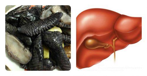 Tác dụng của nấm biển trong điều trị các bệnh về gan.