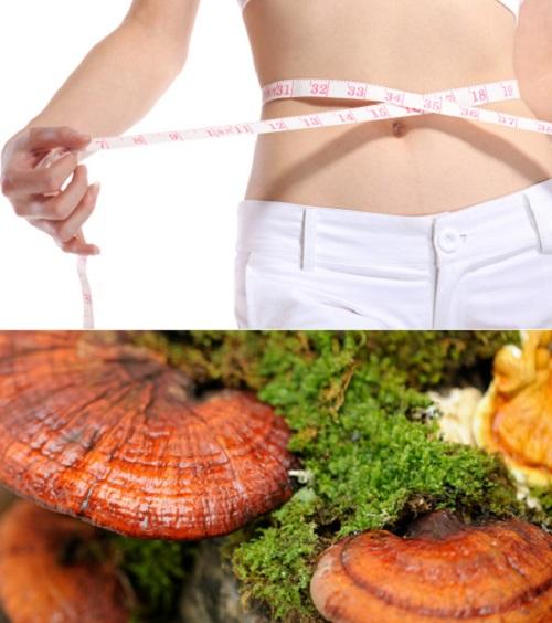 Đặc điểm nấm giảm cân