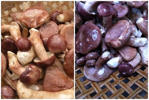 Bảo quản nấm keo bằng cách phơi khô sẽ dùng được lâu.