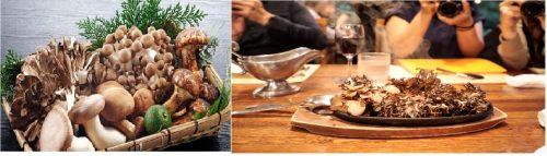 Nấm Maitake là thực phẩm dinh dưỡng không thể thiếu trong các bữa ăn