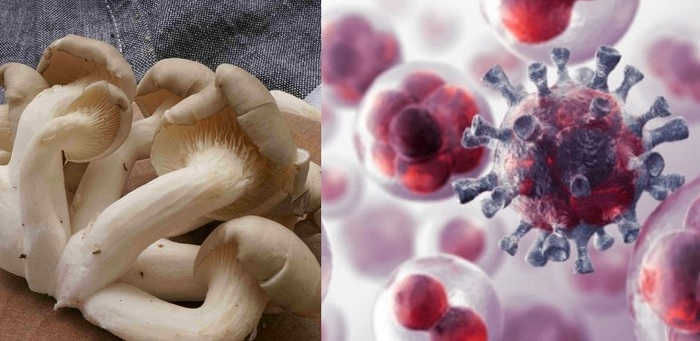 Công dụng của nấm ngọc thạch trong phòng chống bệnh ung thư