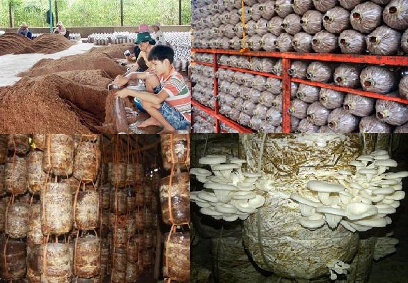 Quy trình trồng nấm ngọc thạch rất quan trọng