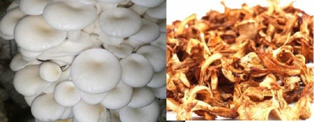 Cách chế biên nấm sò tươi khi nấu ăn