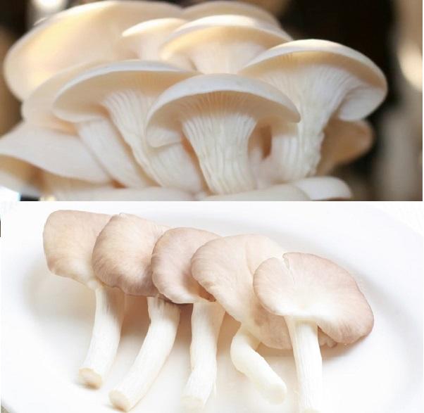 Giá nấm sò rẻ hơn các loại nấm khác