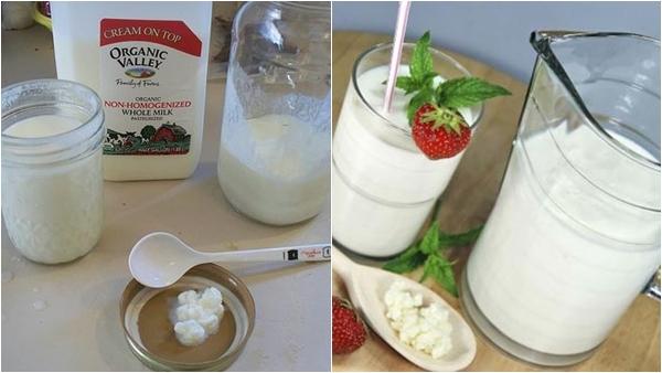Cách nuôi nấm sữa tại nhà