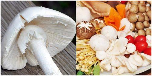 Phân biệt nấm tán trắng và các loại nấm an toàn