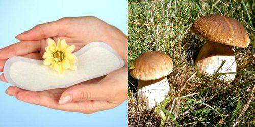 Nấm thông được sử dụng để chữa bệnh khí hư ở phụ nữ