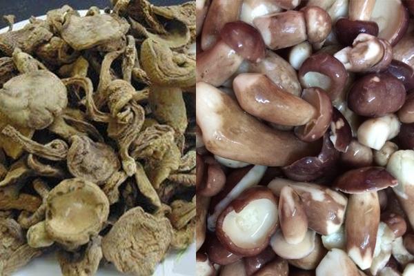 Giá nấm tràm khô và nấm tràm tươi