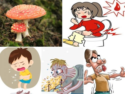 Triệu chứng ngộ độc nấm đỏ, nấm độc